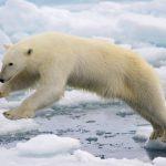 Small-World-TV-Polar-Bear